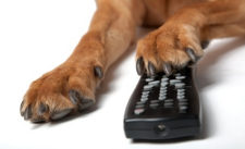 Paw_Remote
