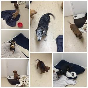 Daisy, Kiki, Lacey, Lady, Lucy, Maddox & Roscoe